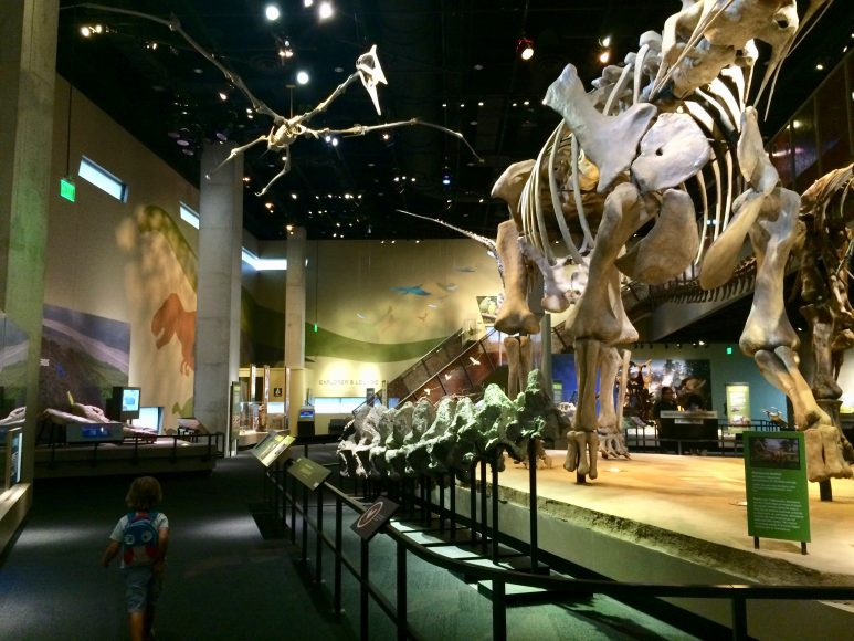 Well hello there! Dinosaur fossil skeletons at the Perot Museum of Nature and Science.